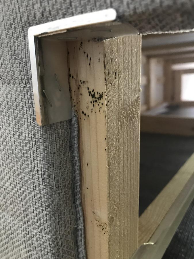 neoprotek anti punaises lit anti moustiques capbreton dax bayonne anglet biarritz. Black Bedroom Furniture Sets. Home Design Ideas